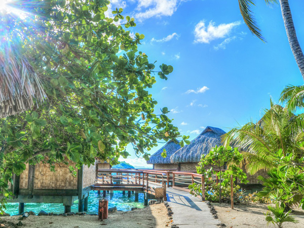 Végétation luxuriante - Bora Bora